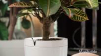 Pot_Planter_Parrot-4