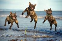 собаки смешные