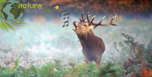 Nature Soundmap-2