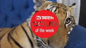 best coub of the week 28 11 2015