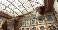 google_natural_history-dinosaurs
