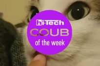 cat coub o the week ht-ua 29-04-17