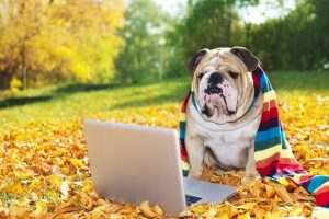 dog_laptop