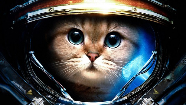 StarCraft II cat