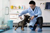 China dog clone