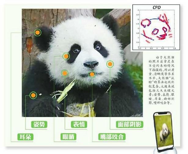 panda ai identify