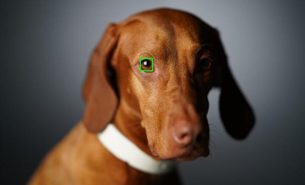 Sony a7R IV автофокус по глазам