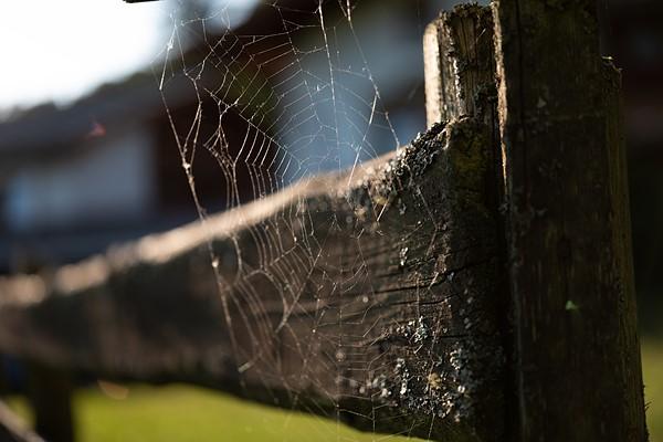 Официальный семпл фото на Leica APO-Summicron-SL 50 mm f2 ASPH
