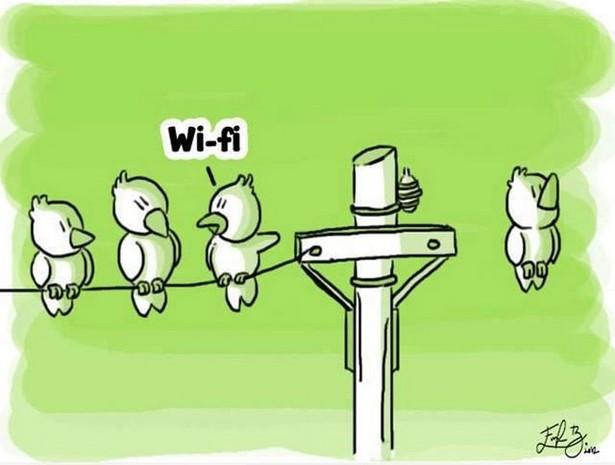 wi fi birds
